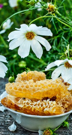 Honig Heilwirkung