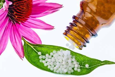 Echinacea Globuli – Wirkung und Anwendung in der Homöopathie