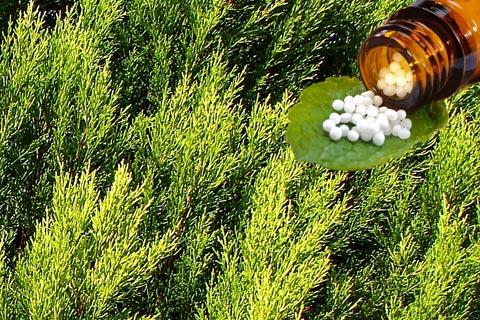 Thuja Globuli – Wirkung und Anwendung in der Homöopathie