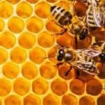 weiter zu - Medizinischer Honig und Gesundheit