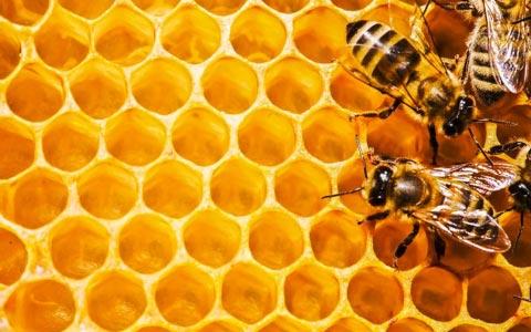 Medizinischer Honig und Gesundheit