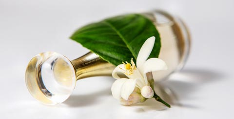 Jasmin-Duft & Jasmin Parfum