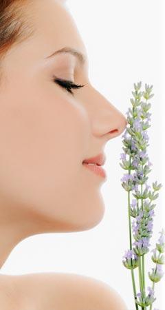 Lavendel-Duft im Parfum