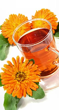 Ringelblume Wirkung und Ringelblume Anwendung