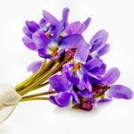 weiter zu - Veilchen-Duft im Parfum