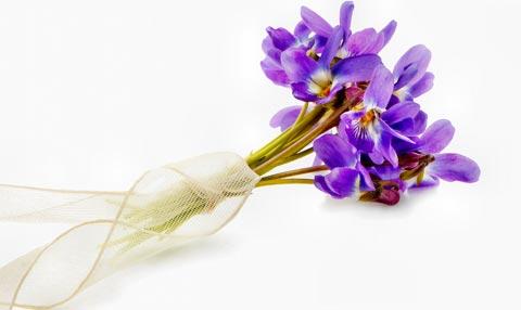 Veilchen-Duft / Veilchen Parfum