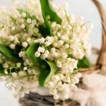 weiter zu - Maiglöckchen-Duft im Parfum