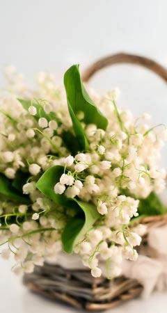 Maiglöckchen-Duft im Maiglöckchen Parfum