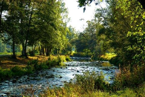 Im Nordschwarzwald die Natur genießen