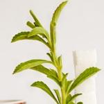 weiter zu - Stevia Zucker