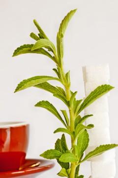 Ist Stevia wie Zucker?