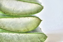 Aloe Vera - Gesundheit - Die Heilpflanze Aloe Vera - Aloe Vera Gel