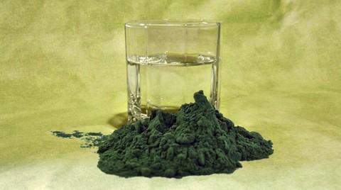 Spirulina oder Chlorella Algen?