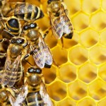 weiter zur Übersicht - Bienenprodukte