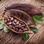 zu Hautpflege - Kakao - ein Mittel gegen trockene Haut