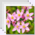 weiter zu - Dr. Edward Bach – Heilung mit Blüten