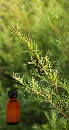 So hilft Teebaumöl gegen Feigwarzen