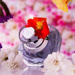 weiter zu -Damendüfte und Parfums