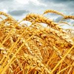 weiter zu - Weizenkleie und Haferkleie abnehmen